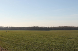 Přeexponované pole