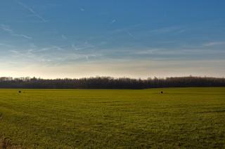 Upravené pole